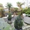 H303 Rear Garden